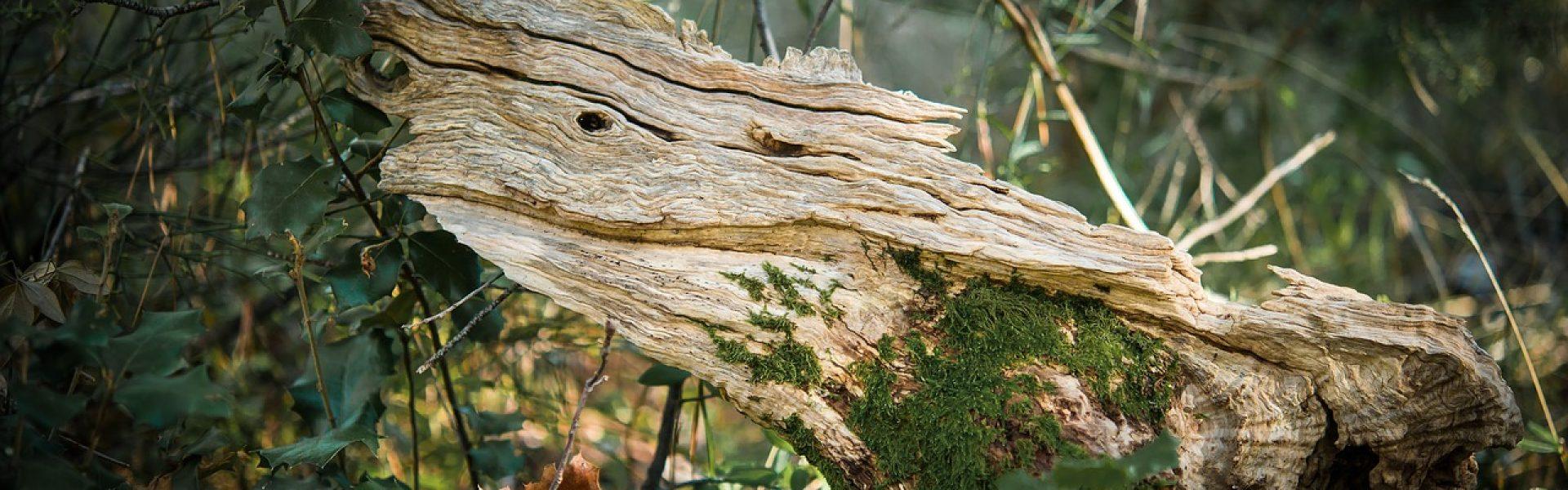 Ratgeber Holzskulpturen Kunstwerke Aus Naturlichen Rohstoffen