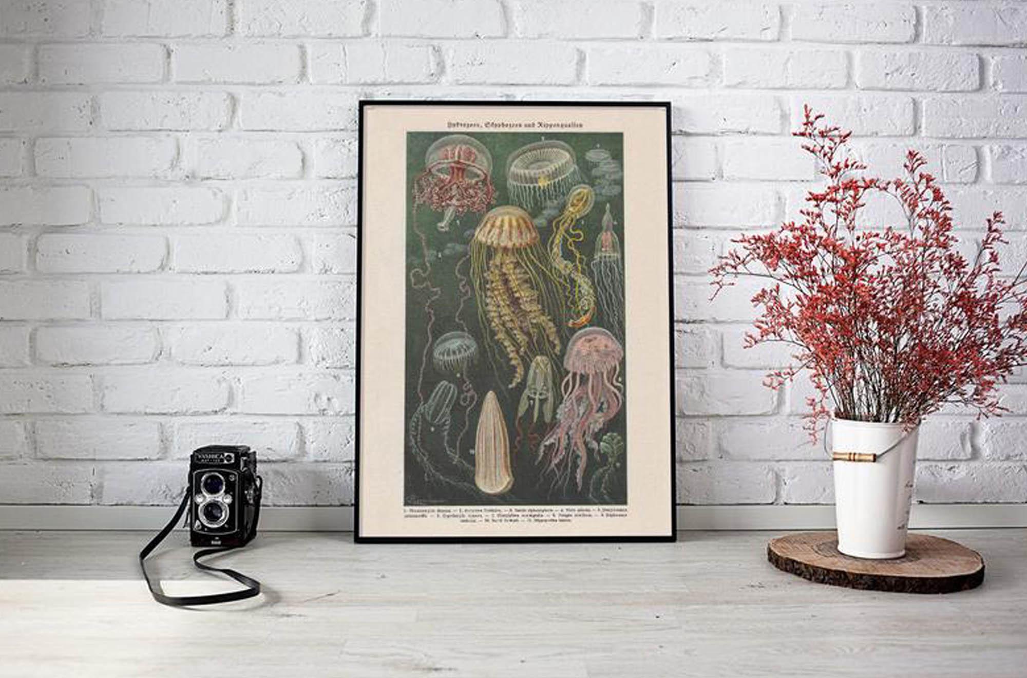 Vintage Print Medusa Jellyfish