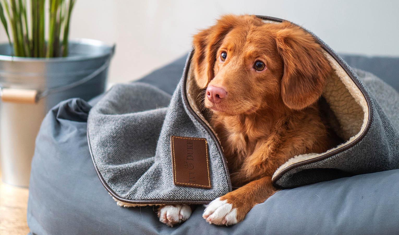 Geschenke für Hundebesitzer – Hundebetten und Hundekissen