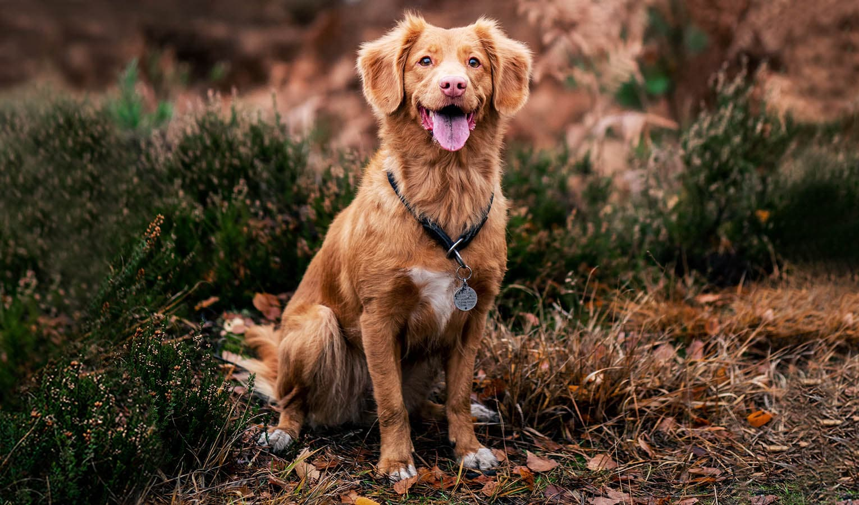 Geschenke für Hundebesitzer_12 stilvolle Geschenkideen