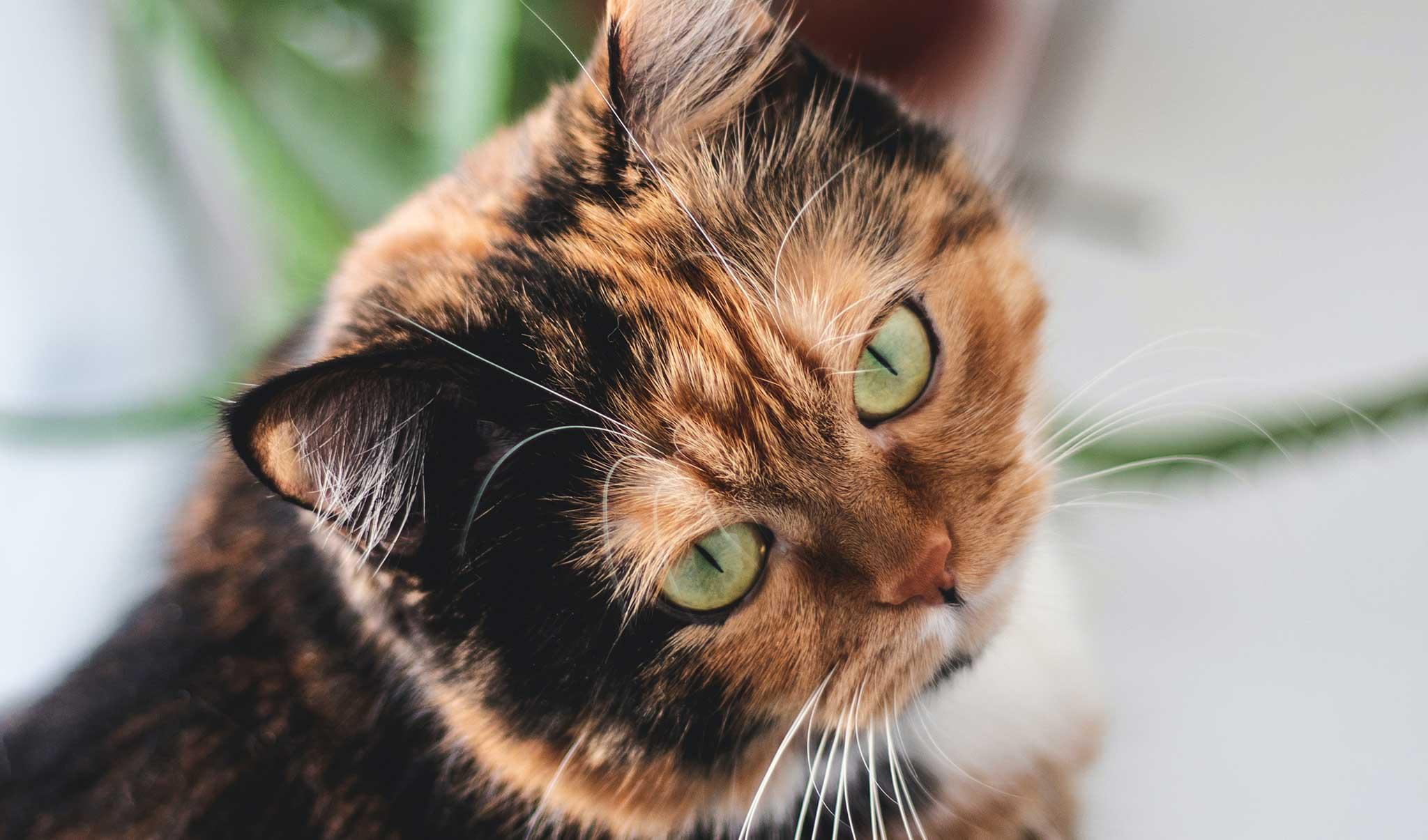 Die besten Katzen Geschenke für anspruchsvolle Katzen