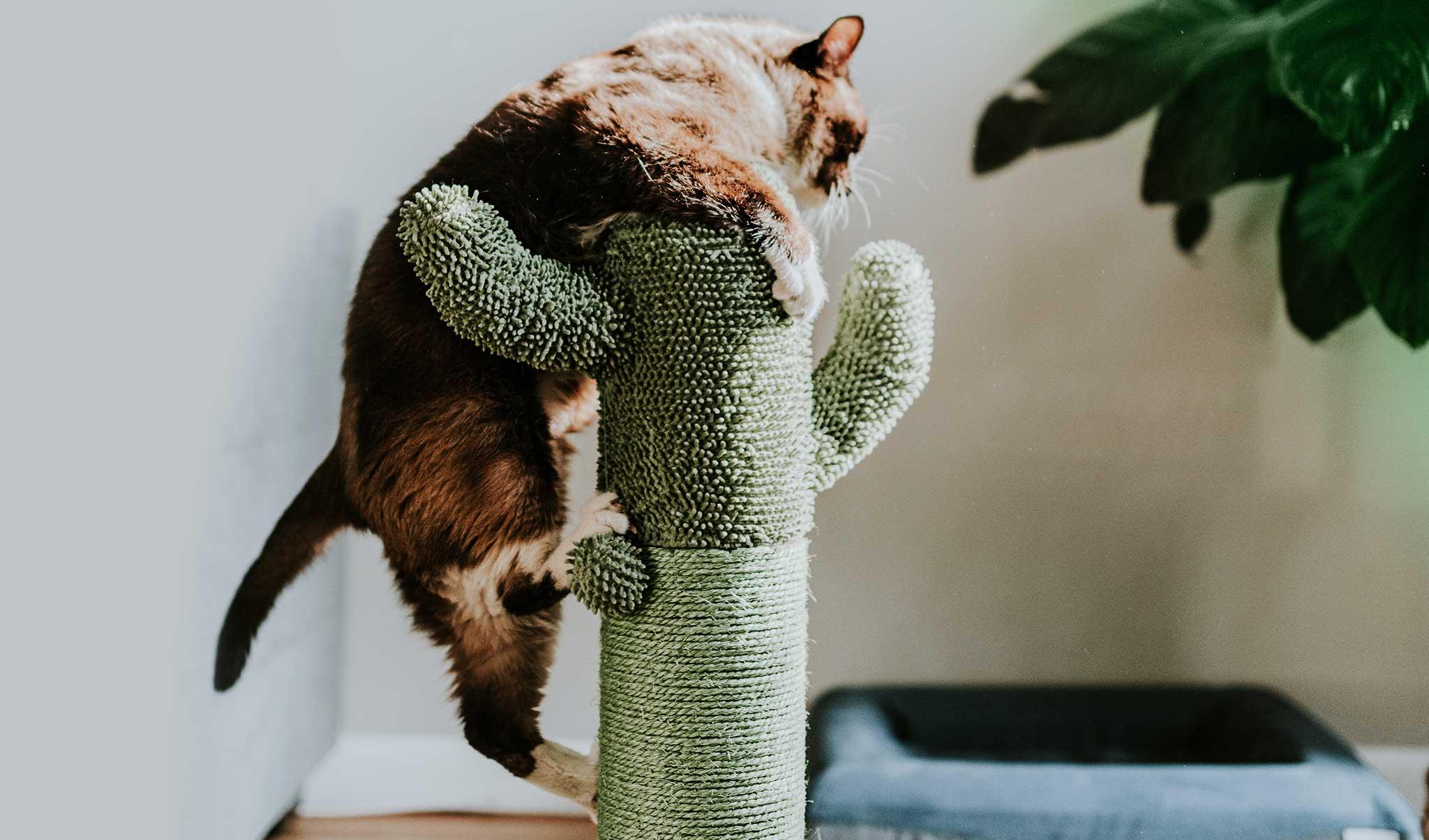 Kratzbaum als Geschenk für Katzenliebhaber