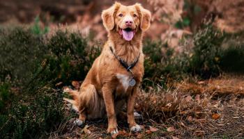 12 stilvolle Geschenke für Hundebesitzer