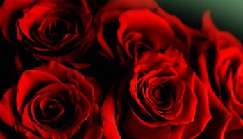 Rosenboxen als Geschenk